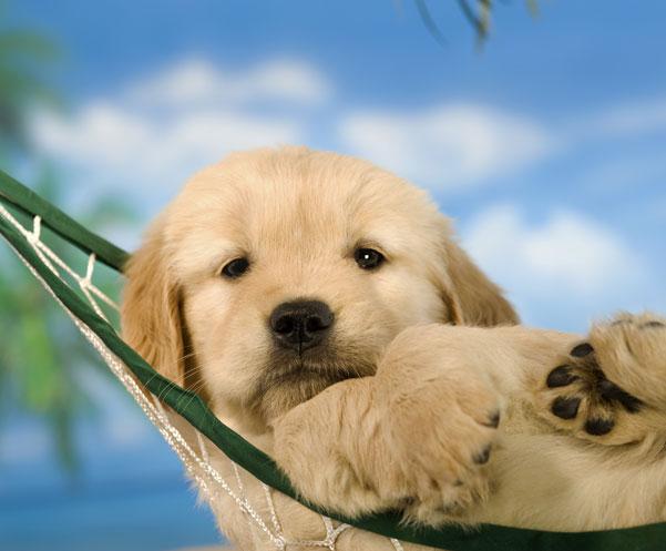 Puppy in a hammock