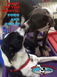 Toro and Violet