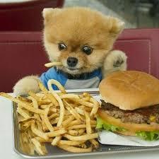 hamburger dog